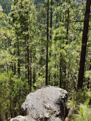 Kiefernwald und steile Abstürze