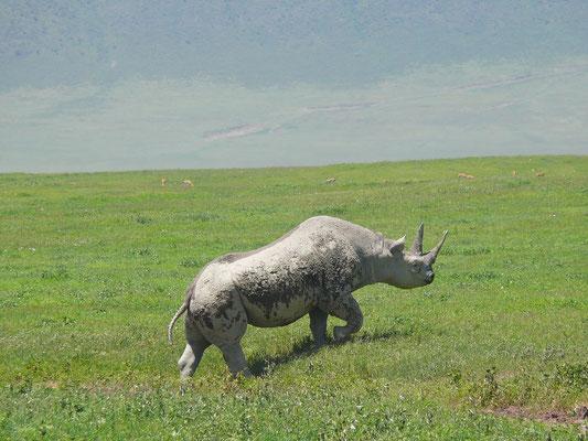 Eines der seltenen Nashörner im Ngorongoro-Krater