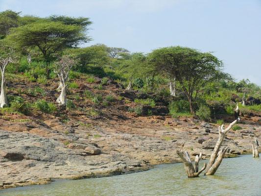 Insel im Baringosee
