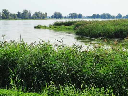 Naturbelassene Uferlandschaft der Oder