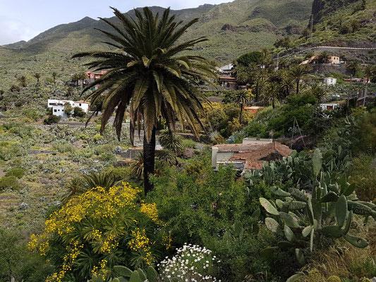 """Masca. Das weiße Haus links ist das Restaurant El Guanche """"Alte Schule"""""""