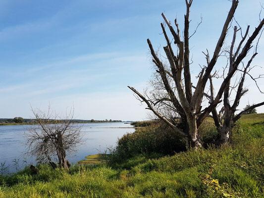 Am Ufer der Oder bei Zollbrücke