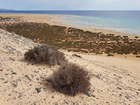 Blick von der Steilküste oberhalb der Großen Düne an der Playa de Sotavento