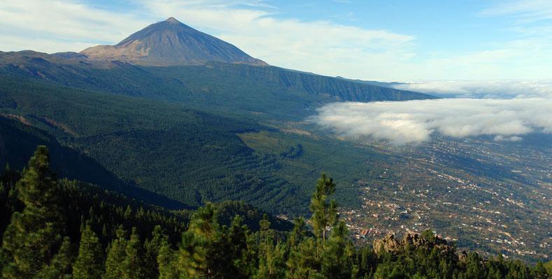 Mirador de Chipeque (?) an der TF 24. Blick nach W auf die Kiefernzone und den Pico de Teide