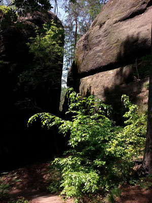 Abstieg von den Schrammsteinen nach Postelwitz und Bad Schandau
