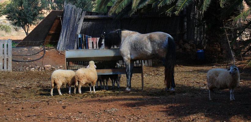 Landwirtschaft in La Antigua