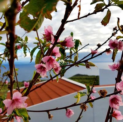 Frühling in Echedo