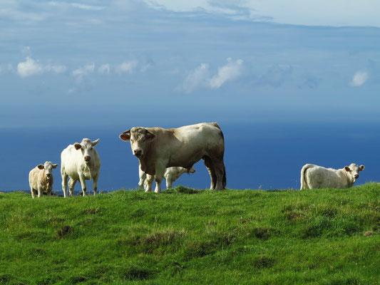 Rinder nahe der Bergstraße R3-2 östlich von Madalena