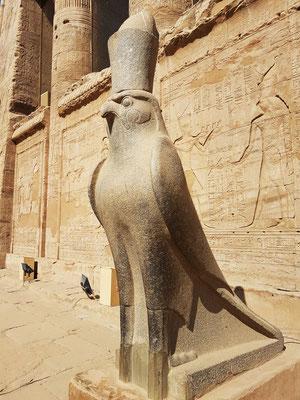 Horusfalke mit Doppelkrone vor dem Pronaos