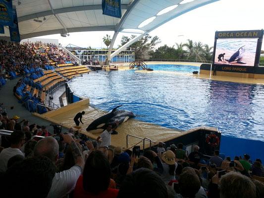 Orca-Show