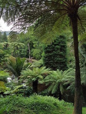 Furnas, im Park der Therme Terra Nostra