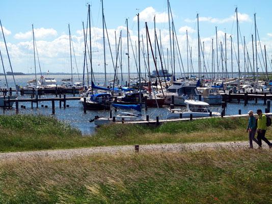 Wanderung von Vitte nach Kloster (Hiddensee), im Hintergrund der Sportboothafen Vitte