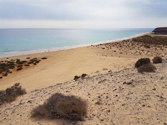 Große Düne an der Playa de Sotavento. Im Vergleich zum Zustand von 1977 ist die Düne durch Zertrampeln durch die Touristen zerstört.