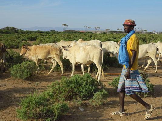 Rinderherde der Samburo, die Anzahl der Tiere ist ein Zeichen für den Reichtum einer Familie.