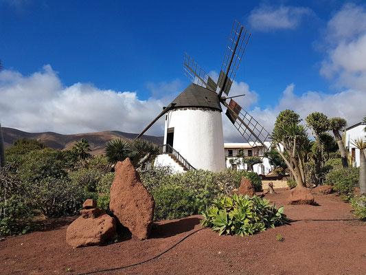 Antigua, Windmühle beim Museo del Queso Majorero