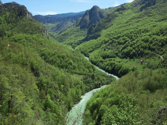 Der Fluss Tara, Blick von der Đurđevića-Tara-Brücke