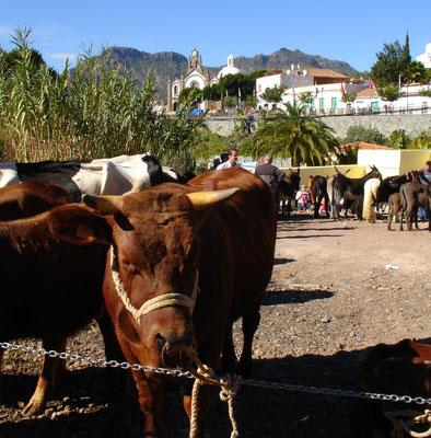 Santa Lucia, Viehmarkt am 13. Dezember 2005
