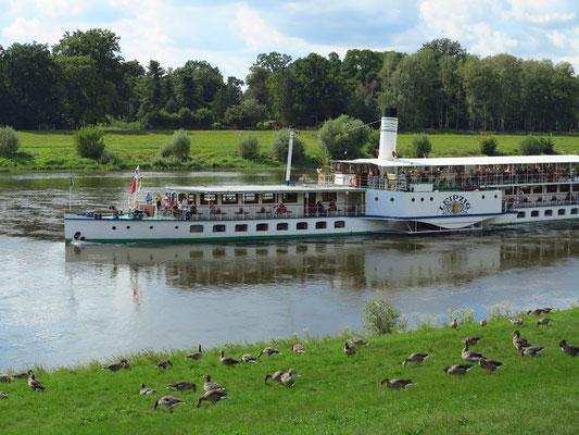 """Das Dampfschiff """"Leipzig"""" erreicht Schloss Pillnitz"""