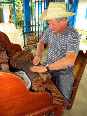 Herstellung der Zigarren