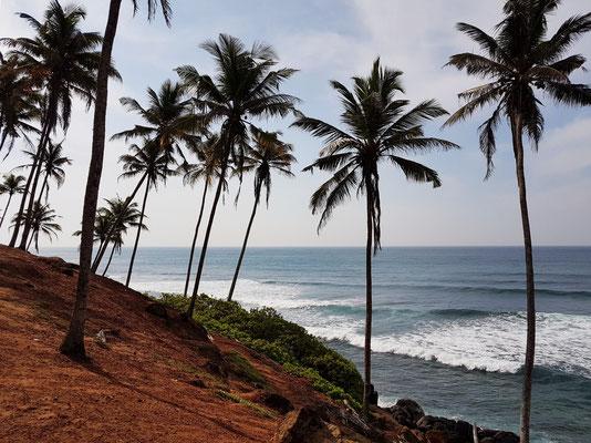 Coconut Garden Mirissa, ein Paradies für Wellenreiter