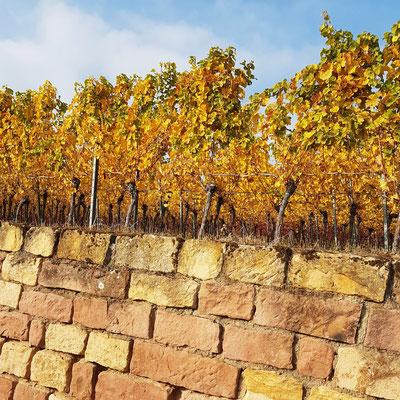 Weinstöcke und Mauern