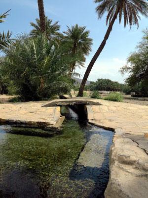 Bewässerungssystem im Palmenhain