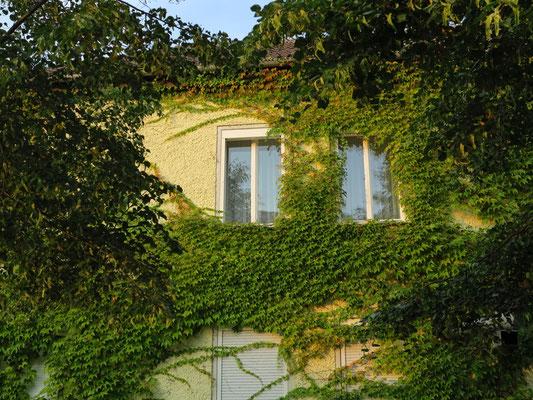 Die beiden Fenster meines Einzelzimmers in der Pension Landfrauen