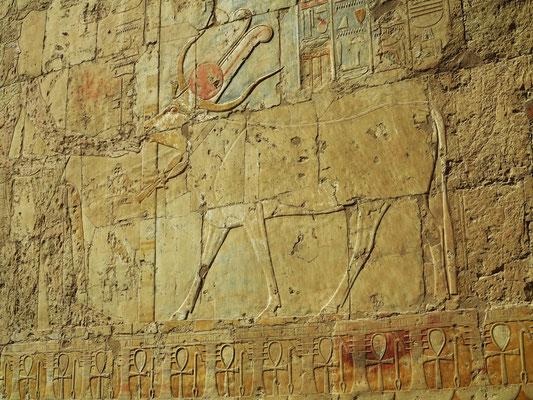 Hathor mit Kuhgehörn und Sonnenscheibe. Die Hathor-Kuh leckt der Hatschepsut die Hand.