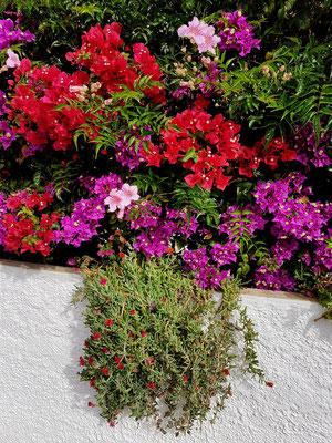 Blumenschmuck an einem Ferienhaus