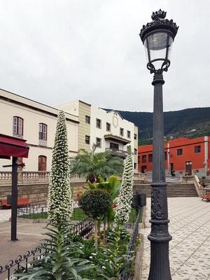 Realejo Bajo, Plaza de la Iglesia mit Taginaste