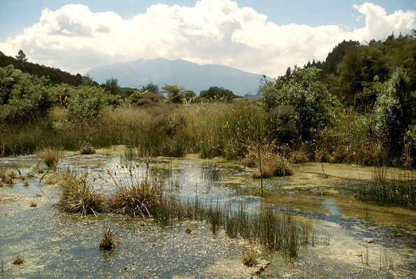 NZ Blick zum Mount Tarawera