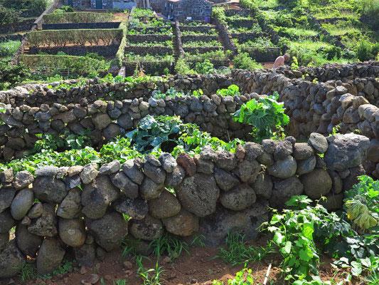 Weingärten von Topo mit Lesesteinmauern