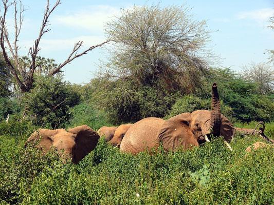 Auch die Elefanten beobachten neugierig uns Eindringlinge.