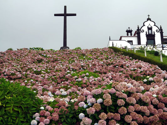 Meer von Hortensien an der Ermida de Nossa Senhora da Paz