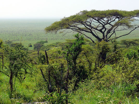 Serengeti Visitor's Centre