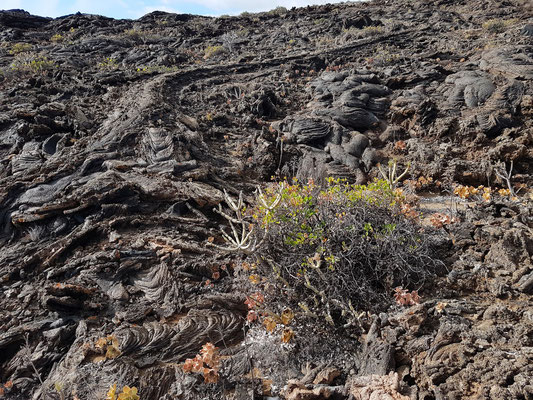 Lavadecken im Bereich des Centro De Interpretación Vulkanologica