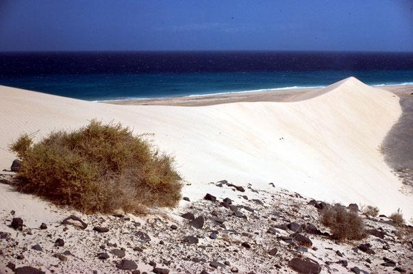 Große Düne 1977: deutlich sichtbar sind die Höhe und die scharfe Kante.
