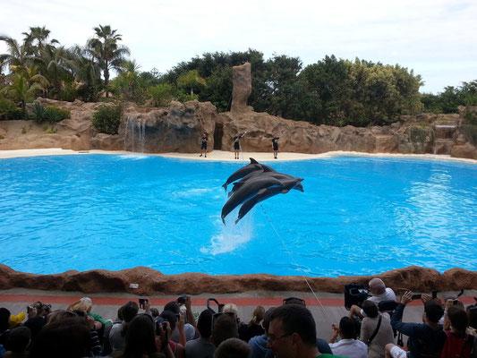 Delphin-Show