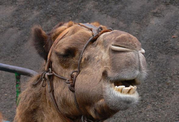 Rastplatz der Kamele, am Fuß der Montaña de Timanfaya