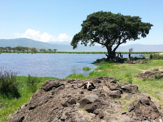 Hippo-Teich, im Vordergrund der Schädel eines Kaffernbüffels