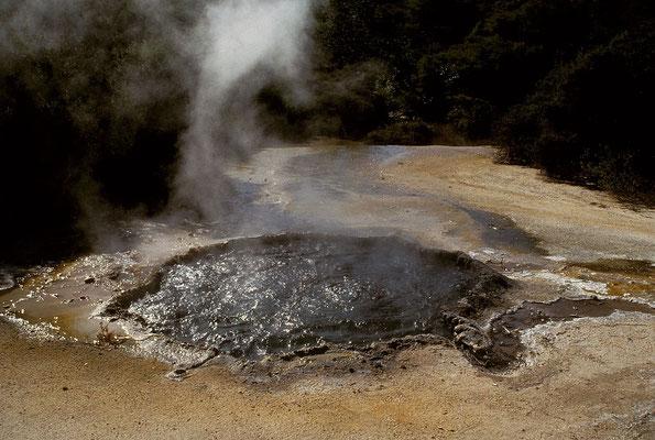 NZ Rotorua