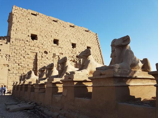 Widdersphinxallee vor dem Ersten Pylon des Karnaktempels, rechte Seite