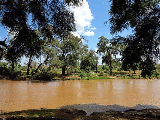 Uaso Nyiro Fluss mit Galeriewald im Bereich der Samburo-Lodge