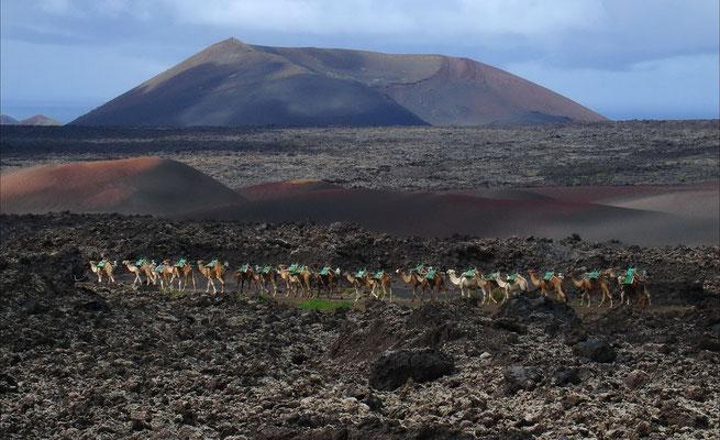 Pico Redondo, nordwestlich von Yaiza, Kamelkarawane auf dem Heimweg nach Uga