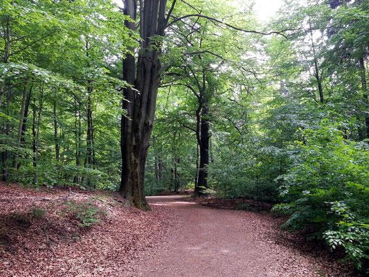Wanderweg durch Buchwälder von Wehlen zur Bastei, vorbei am Steinernen Tisch