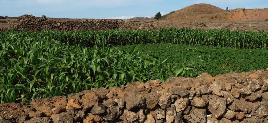 ... und Landwirtschaft bei San Andrés