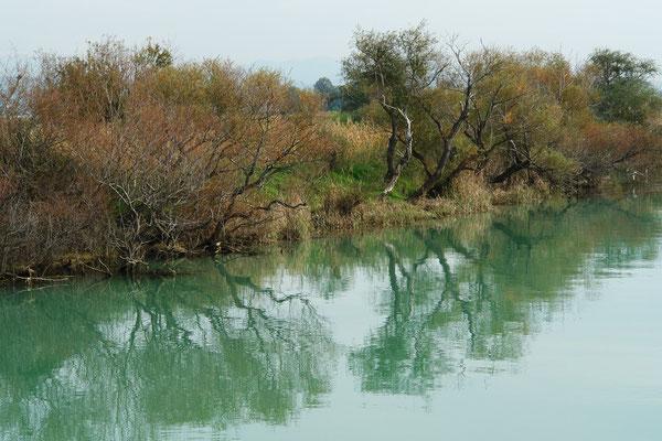 Vegetation am Ufer des Manavgat
