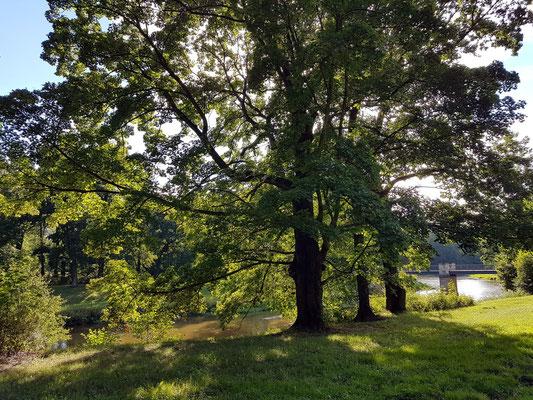 Im polnischen Teil des Parks mit Blick auf die Englische Brücke