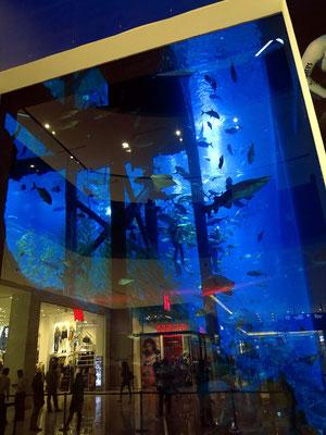 Das Dubai Aquarium & Underwater Zoo erstreckt sich über drei Etagen. Mehr als 33.000 Wassertiere