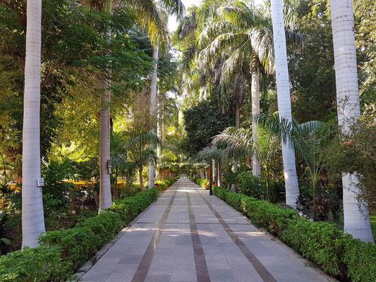 Zwischenstopp im Botanischen Garten der Kitchener-Insel